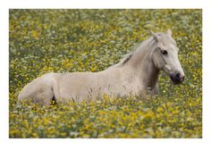 horse in a meadow..