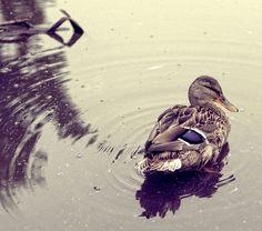 Photograph Morning Swim by Heljä-Mari Veijonen on 500px