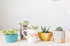 5 Cheap & Easy Potted Succulents