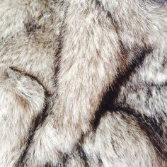 fashion and fur-bilde