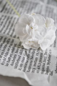 Julia's White Dreams: Flowers