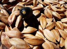 Traveling Morion | Let's explore 7107 Islands: PostCard Series| Pili Nuts of Bicol