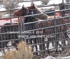 Humane Observer: Elyse Gardner: NOWHERE TO HIDE: CALLING FOR A CONGRESSIONAL INVESTIGATION OF BLM AS THEY SEND AT LEAST 1,700 WILD HORSES STRAIGHT TO -- WHERE?