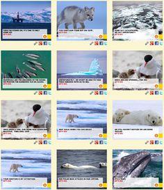 www.arcticready.com/social