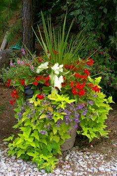 sweet potato vine dianthus caladium and others