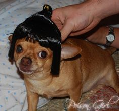 Community: 50 Hilarious Dogs In Wigs