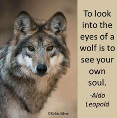 To Look into the Eyes of a Wolf is to See Your Own Soul--Aldo Leopold