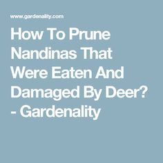 How To Prune Nandinas That Were Eaten And Damaged By Deer? - Gardenality
