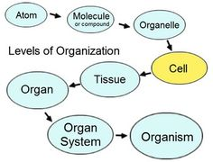 Chapter 1: Introduction to Human Anatomy and Physiology Notes