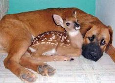 """""""Our prime purpose in this life is to help others. And if you can't help them, at least don't hurt them.""""  Dalai Lama"""