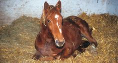 Prevention and Treatment of Respiratory Infections in Horses