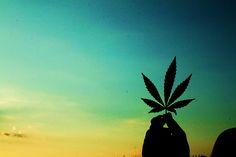 The Social Weed, Cannabis Recipes, Cannabis Strains, Cannabis Dispensary Locator Cannabis, Medical Marijuana, Marijuana Art, Ganja, Marijuana Leaves, Vito, Puff And Pass, Smoking Weed, Background Pictures