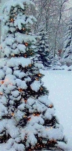 SO Very Pretty ! I love when the lights shine underneath the snow on a bush or evergreen! Design by http://photo-sharpen.com