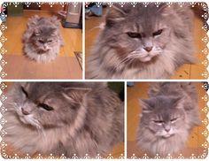 愛猫さくら姫|SHOOP+FACTORY(シュープ・ファクトリー)@オーナーブログ-147ページ目
