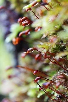 red and green moss offspring
