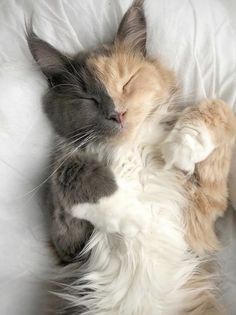 Cute Little Animals, Cute Funny Animals, Cute Animal Photos, Animal Pictures, Cute Kittens, Cats And Kittens, Cat Aesthetic, Cute Creatures, Pretty Cats