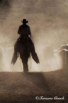 Cowboy Dust and Horse