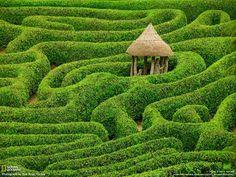 Laurel maze at Glendurgan Garden. Cornwall, England.     Can you get out of this maze?
