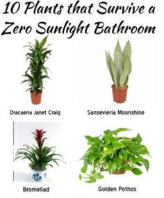 10 Plants that Survive in a Zero-Sunlight Bathroom – DIYFix.org