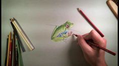 Colored Pencil Drawing of a Frog Live Lesson Excerpts