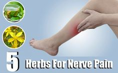 Herbs For Nerve Pain