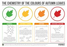 A helpful chart by Compound Interest explains the chemicals that give leaves their color both when they are green and when they change color in autumn. Leaves are green because of chlorophyll, yell...