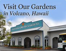 Visit Akatsuka Orchid Gardens in Volcano, HI - 1 hour tour $35 per person Wednesdays & Fridays (10am & 2pm)