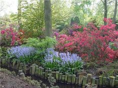 Azaleas and woodland hyacinth put on a gorgeous spring show in this Asian-inspired woodland garden. Photo by Maureen Gilmer.