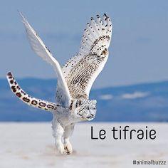 #bonjour découvrez le #tifraie #animomix #animalbuzzz