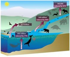 Wildlife and Habitat Conservation News: Declines in marine, large animals disrupt Earth's nutrient cycle