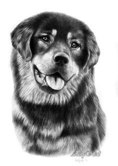 German Shepherd puppy, A4.