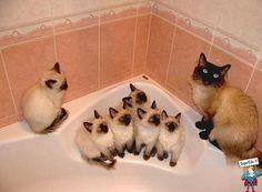 Quando possiamo fare il bagnetto?