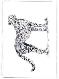 Гепард 2