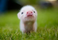 .cute!.