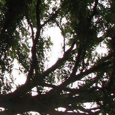 Si te acercas demasiado el árbol no te dejará ver el bosque.