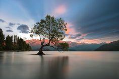 The Lonely tree of Lake Wanaka, South Island, New Zealand at Dusk by Anupong Sakoolchai - Photo 180551557 / 500px