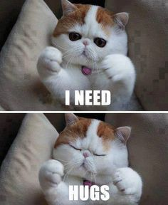 I need hugs  #cats #animals