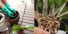 Veja 4 dicas para cuidar bem das orquídeas no verão e deixar a sua planta sadia mesmo na temporada mais quente do ano! Agaves, Portal, Gardening Tips, Take Care, Herbs, Garden, Everything, Natural Person, Architecture