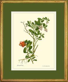 Airelle botanique impression reproduction par PosterPlace sur Etsy