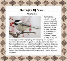 The Magick Of Nature - Chickadee Animal Spirit Guides, Spirit Animal, Wicca, Magick, Classroom Bulletin Boards, Animal Magic, Feathers, Herbalism, Spirituality