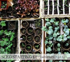 Seed Starting 101 - really helpful detailed tips for growing your own garden from seed at http://empressofdirt.net/seed-starting-101/