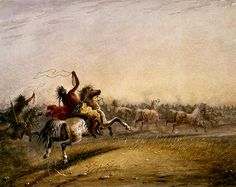 Cavalli Selvaggi, Lanciando il Lasso 1867 Bizon, Jacob Miller, Fur Trade, American Artists, Nativity, Respect, Portrait, Pictures, People