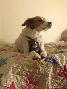 medium dog and small cat