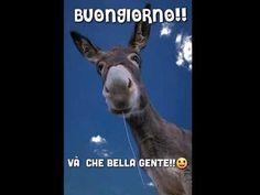 Happy Gif, Youtube, Horses, Bella, Funny, Video, Animals, Instagram, Musica