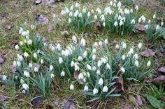 Jak připravit zahradu na sezonu – jarní práce Plants, Lily, Planters, Plant, Planting