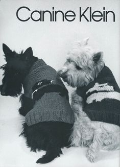 1000 Images About Westies Are The Besties On Pinterest