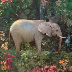 Once there was an Elephant