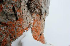 Orange Algae on Mt Pilatus - Lucerne, Switzerland
