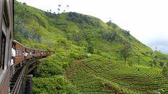 Vivez une expérience extraordinaire en parcourant les plantations de thé dans un train local Sri-lankais.
