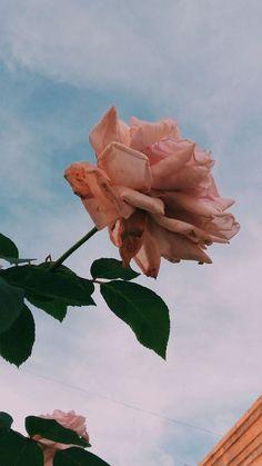 IPhone Colorful Wallpaper Beautiful Rose